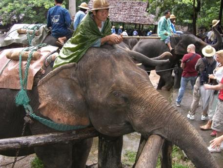 Frau auf Elefant