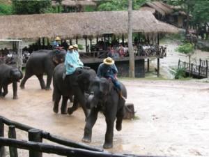 Elefantensafari 2