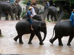Elefantensafari Indonesien