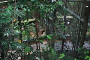 Vogelpark Singarpur 1