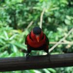 Vogelpark Singarpur