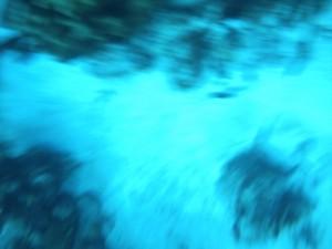 Whale Island Tauchen