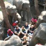 Thailand ein Erlebnis für die ganze Familie