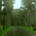 Bogor botanischer Garten