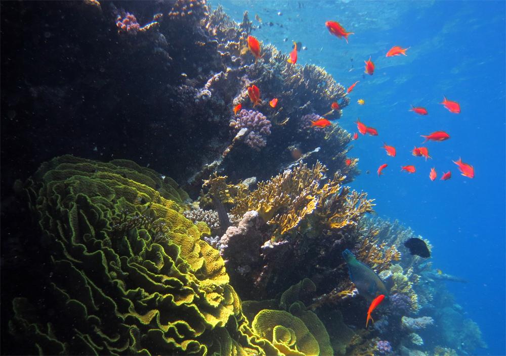 Tauchen in Osttimor